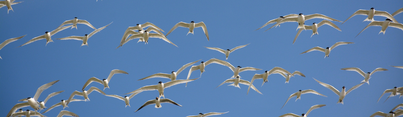 Vogelwachters terug op Griend
